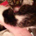 Kitty's Soft Spot