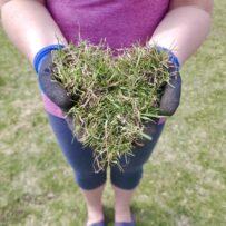 Nice Grass!